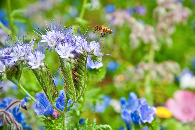 Monmouthshire welcomes new pollinator project A new pilot project Nature Isn't Neat will be launched during Monmouth Town's Bee Festival at The Nelson's Garden on Sunday May 19th.